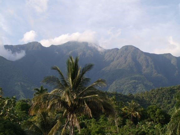 Kuuba palmu